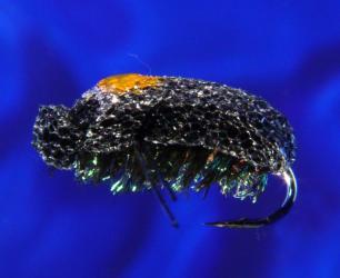 Black Foam Beetle Black Foam Beetle-14