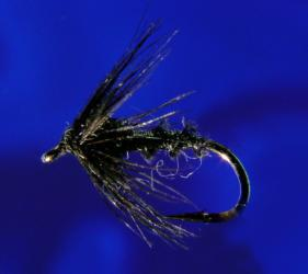 Black Quill-18 Black Quill-18