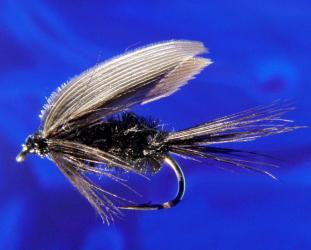Black Gnat-12 Black Gnat-12